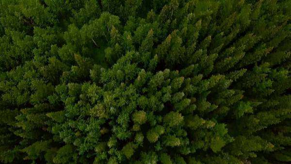 Aerial shot of green trees and hills Royalty-free stock video