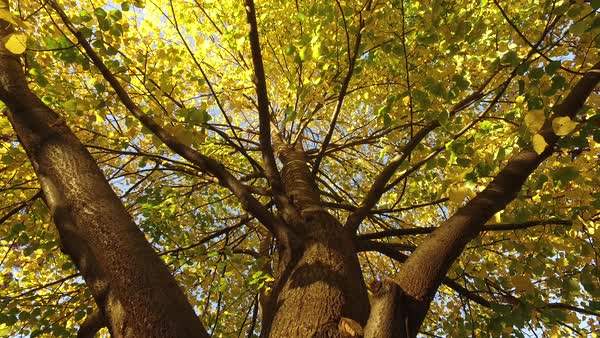 Low angle shot of the foliage of a tree Rights-managed stock video