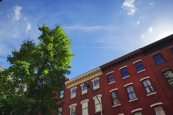 Timelapse of a tree at a building in Philadelphia, PA, USA Rights-managed stock video