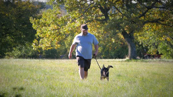 Young German Shepherd and trainer walking in the field front medium Royalty-free stock video