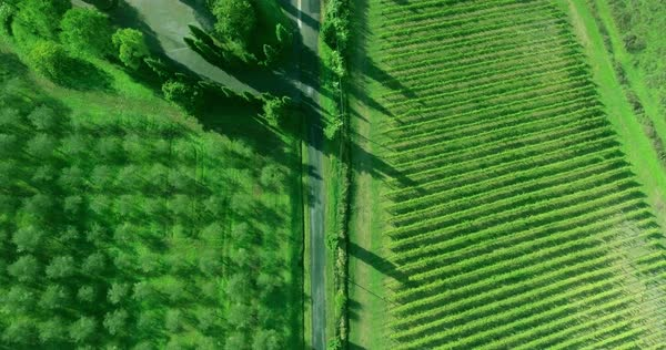 Aerial view of vineyard, grove and a road between them. Royalty-free stock video