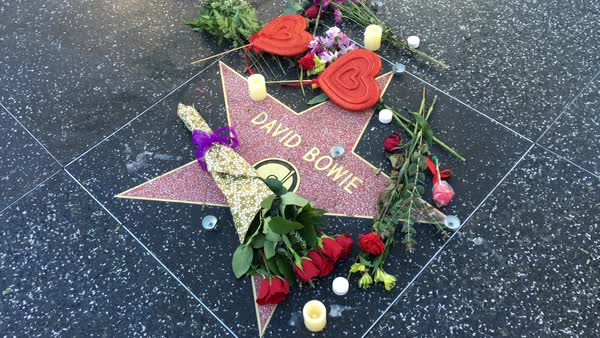 HOLLYWOOD, CA - Circa February, 2016: An anonymous fan places a rose on David Bowie's Walk of Fame star in Hollywood.  	 Royalty-free stock video
