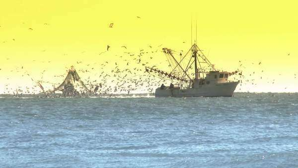 Two commercial fishing boats on the morning horizon in the distance. Royalty-free stock video