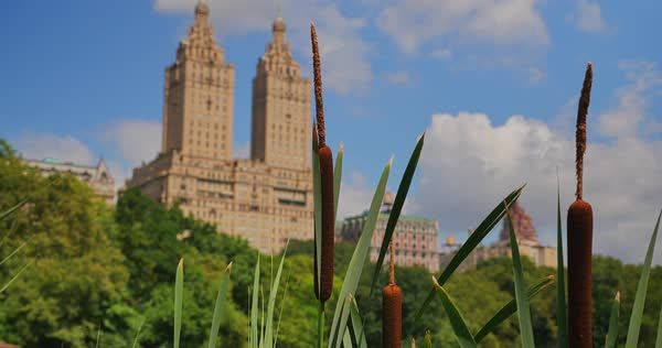 NEW YORK - Circa July, 2016 - A day establishing shot of upscale apartment buildings near Central Park as seen through cattails near the Lake. Royalty-free stock video