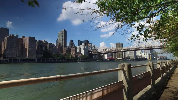 The Manhattan skyline and Ed Koch Queensboro Bridge as seen from the sidewalks and treelined paths of Roosevelt Island.	 	 Royalty-free stock video