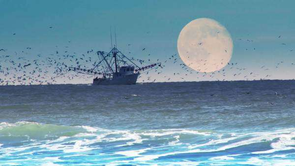 A commercial fishing boat on the horizon with a full moon behind. Royalty-free stock video
