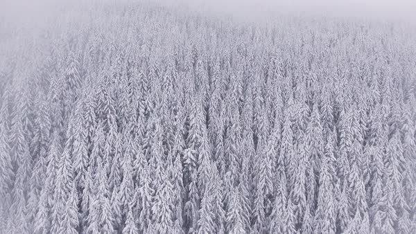 Oregon Winter Forest Aerial Snowy Fog Rights-managed stock video