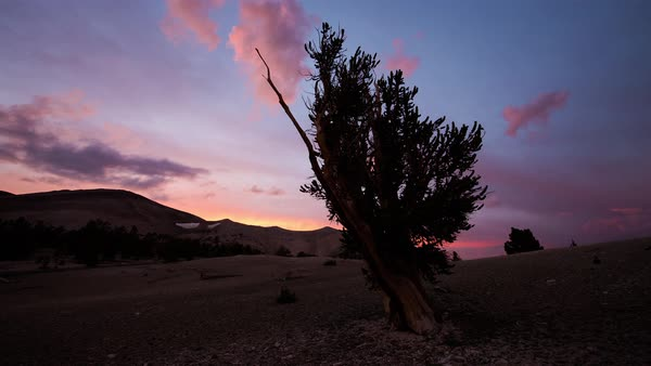 Bristlecone Pine Forest Sunset Timelapse Rights-managed stock video