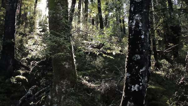 Handheld shot of sun shining through trees in a forest Royalty-free stock video