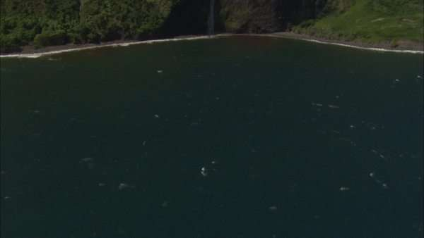 Aerial shot of a waterfall on a coast Royalty-free stock video