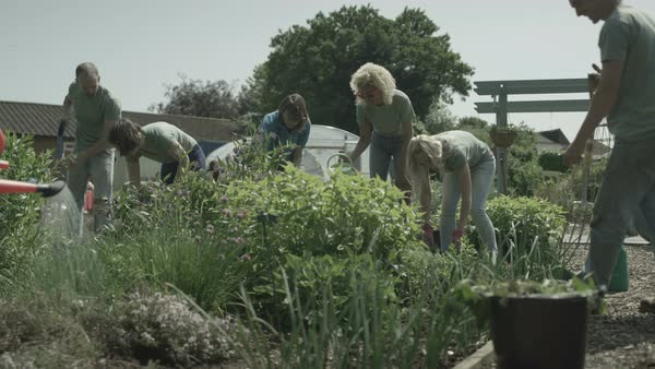Volunteers of mixed ages working and spending time in community garden. Royalty-free stock video
