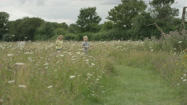 Cute little girl and boy playing together in the countryside on a summer day. Royalty-free stock video