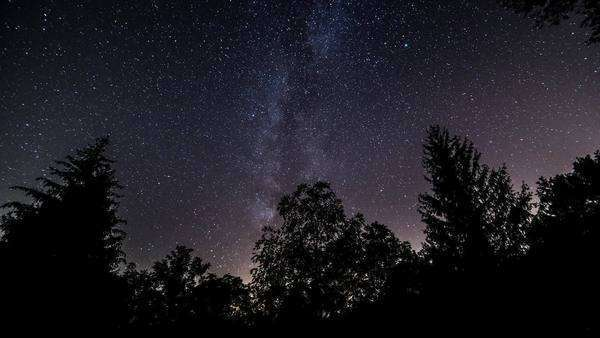 Milky way passes over a pine tree forest  timelapse Royalty-free stock video
