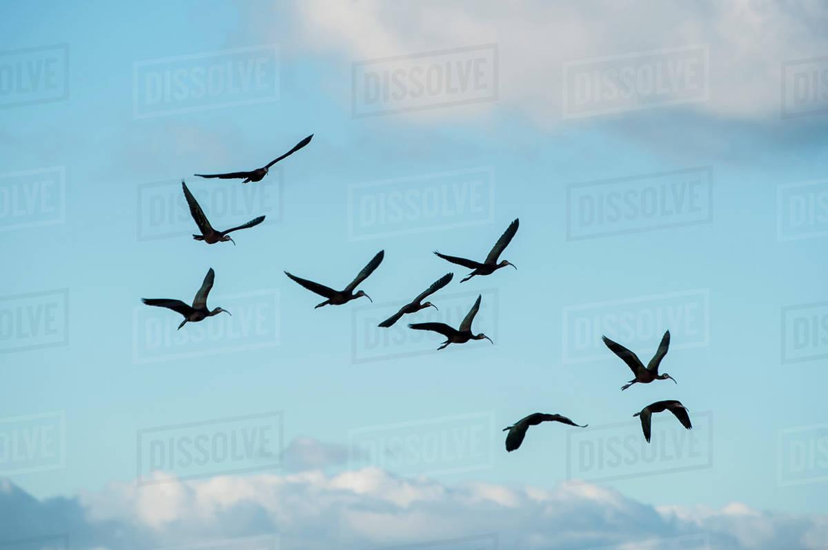 Birds flying blue sky photo