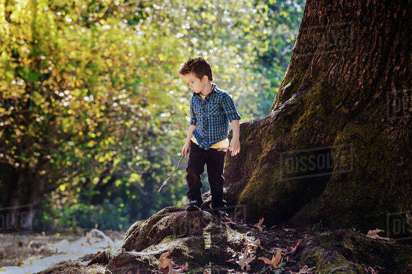 Young boy exploring in a forest beside a large oak tree; Langley, British Columbia, Canada Royalty-free stock photo