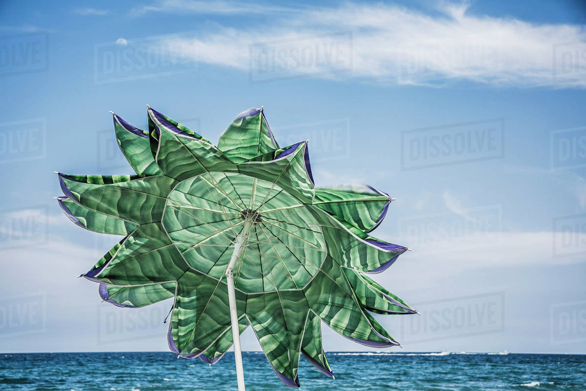 Beach Umbrella In The Shape Of A Flower Florida United States America