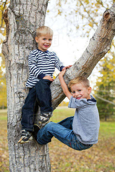 Portrait of two brothers in a tree; Edmonton, Alberta, Canada Royalty-free stock photo