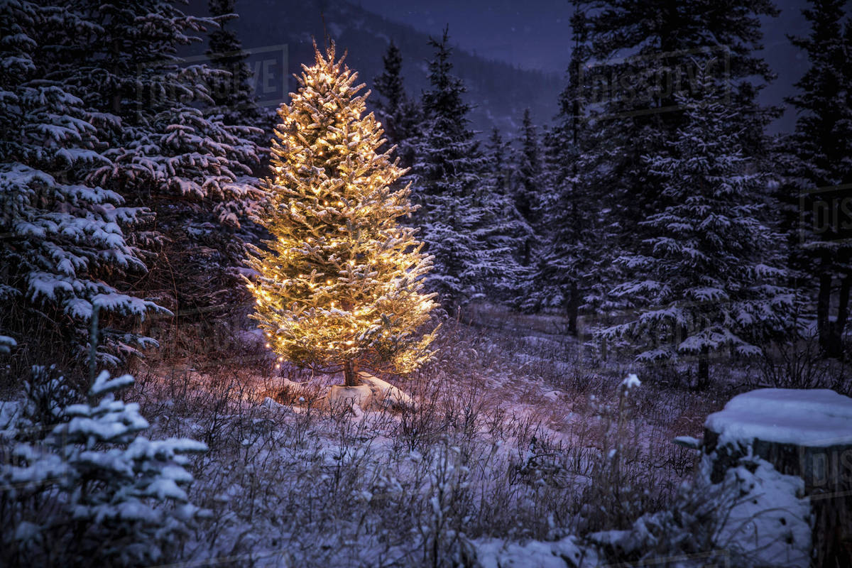 lighted christmas tree in forest of snow covered trees in winteralaska united states of america