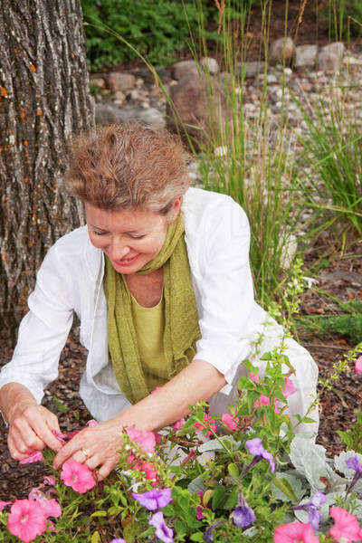 Woman Kneeling Beside Flowers In Garden, Manitoba, Canada Royalty-free stock photo