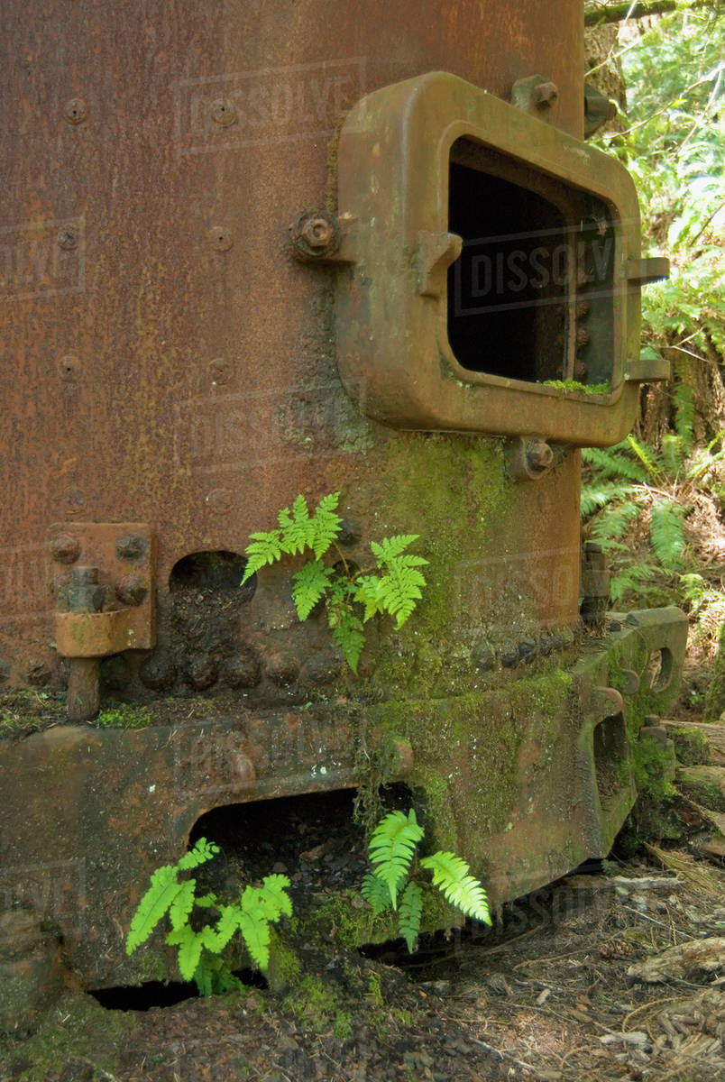 Rusty Boiler From A Steam Engine Used For Logging In The Early 20Th  Century, West Coast Trail, Pacific Rim National Park Reserve, Bc, Canada  stock