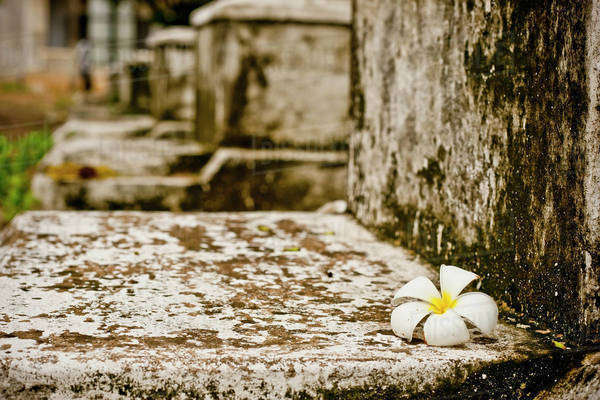 A Plumeria Flower Sits Atop A Grave To The Political Prisoners Who Died In The Security Prison S-21 At The Tuol Sleng Genocide Museum; Phnom Penh, Cambodia Royalty-free stock photo