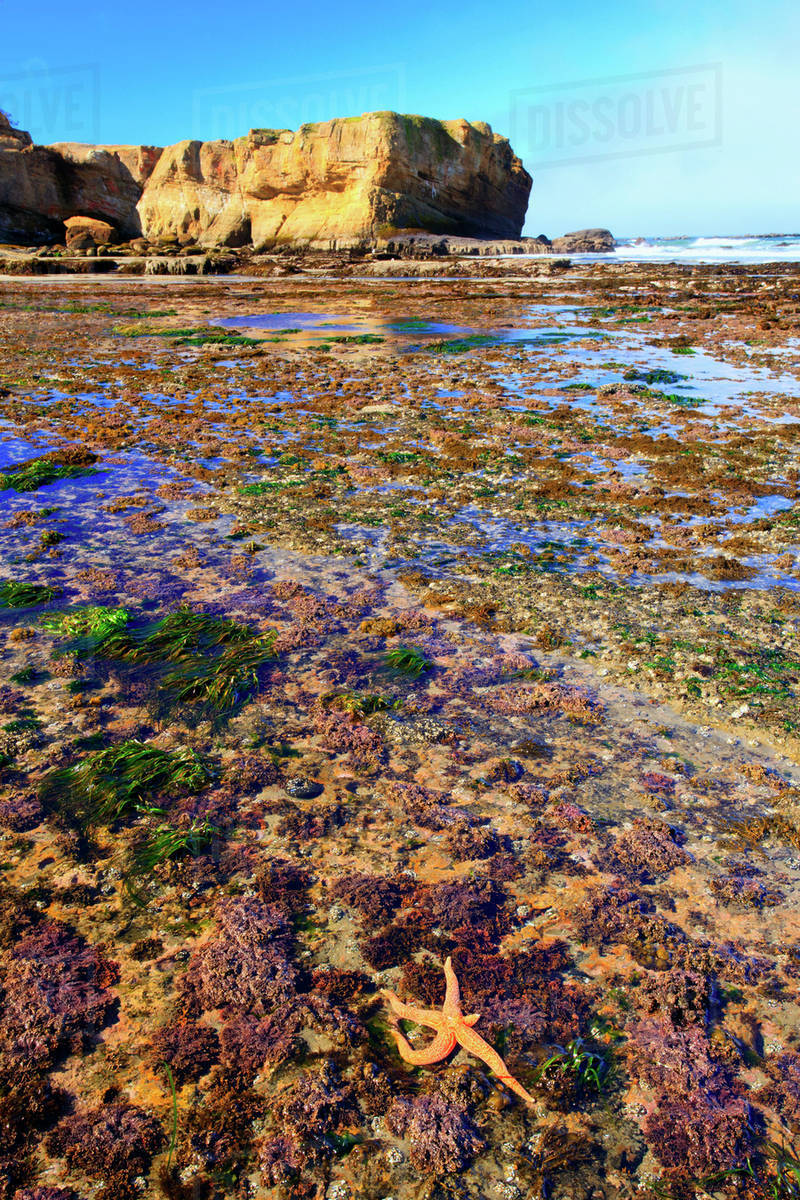 Low Tide And Rock Formations At Otter Beach Oregon United States Of America