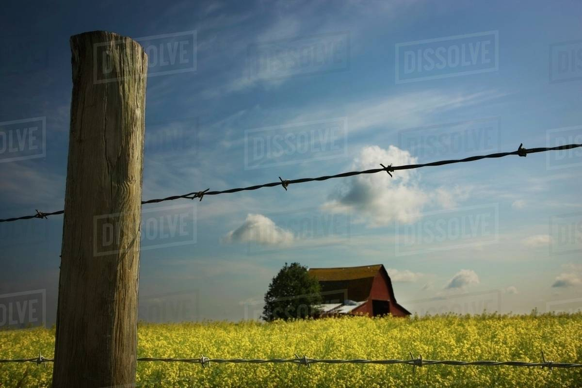 Alberta, Canada; View Of An Old Barn Through A Barbed Wire Fence ...