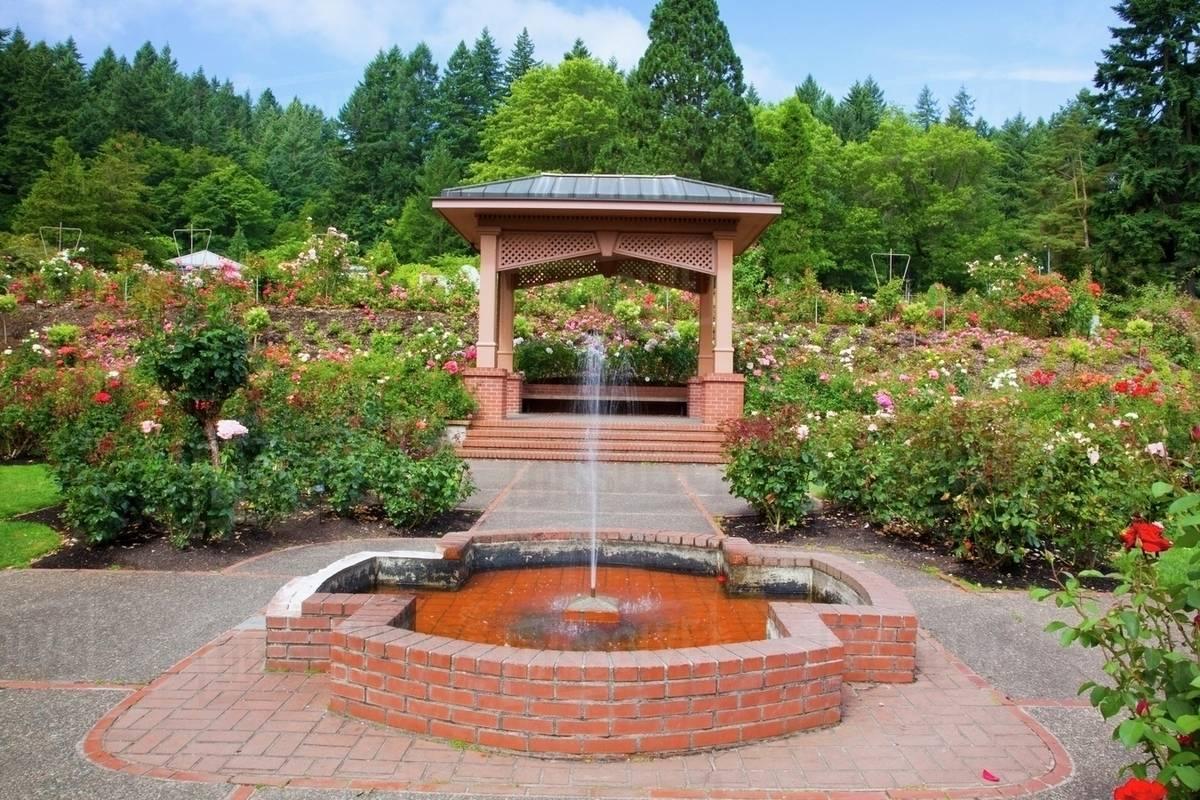 Fountain And Gazebo In Portland Rose Garden Portland Oregon Usa