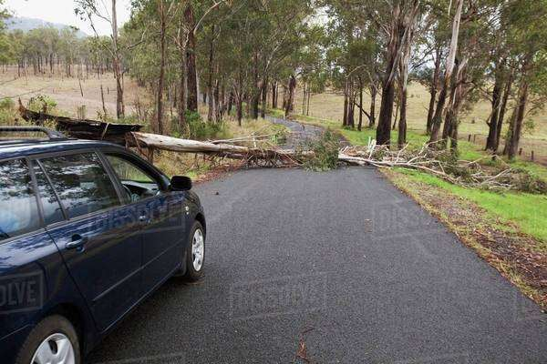 A Car Stopped Where A Tree Has Fallen Across A Road; Gold Coast, Queensland, Australia Royalty-free stock photo