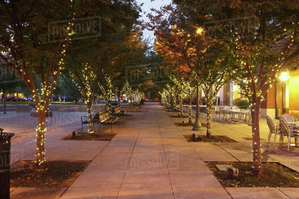 lights on the trees in jamison square in the pearl district