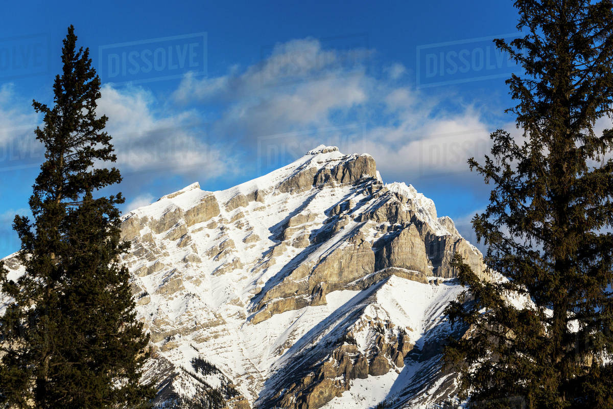 Snow covered mountain framed by evergreen trees with blue sky and ...
