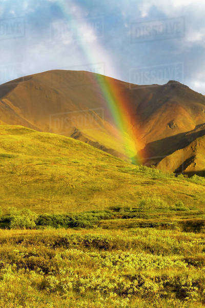 A colorful rainbow lights up the evening green tundra in Highway Pass in Denali National Park; Alaska, United States of America Royalty-free stock photo