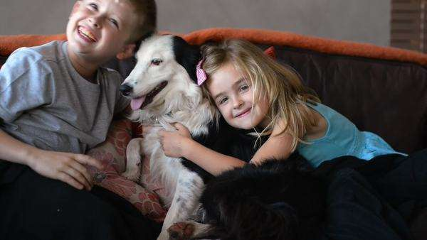 Brother and sister sitting on couch having fun playing and petting family pet border collie dog Royalty-free stock video