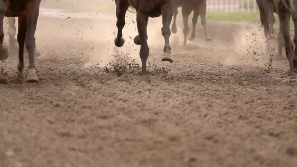 Herd of Horses Raises Dust While Running Royalty-free stock video
