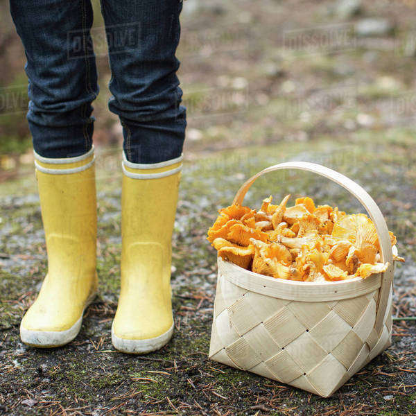 Low section of girl wearing rubber boots standing by basket full of mushrooms Royalty-free stock photo