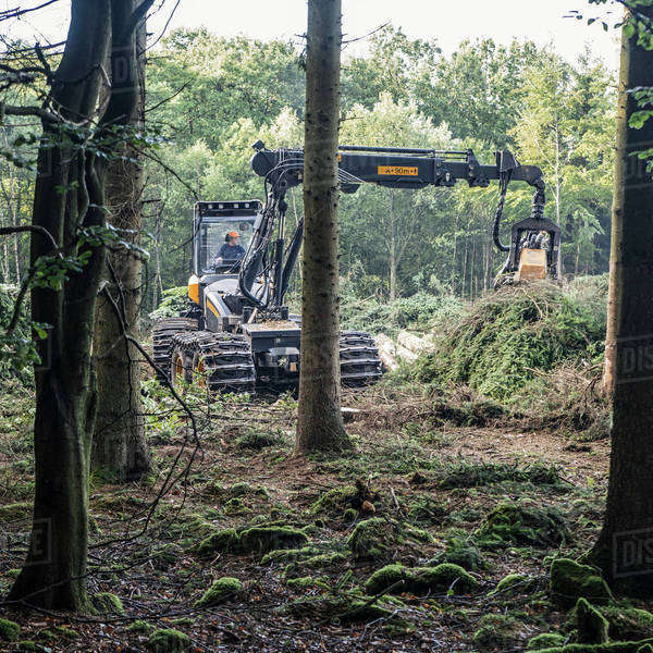 Earth mover lifting fallen tree in woodland Royalty-free stock photo