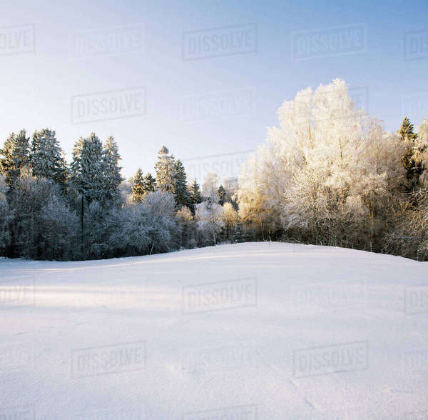 Trees on snow covered field against sky Royalty-free stock photo