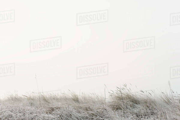 Tranquil view of grassy field in foggy weather against sky Royalty-free stock photo