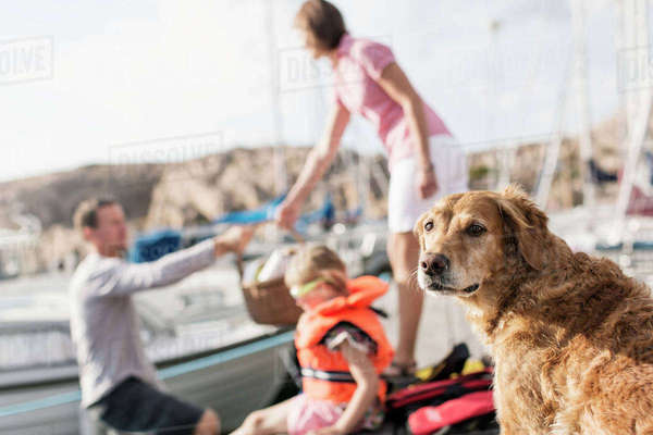 Golden Retriever against family in background at harbor Royalty-free stock photo