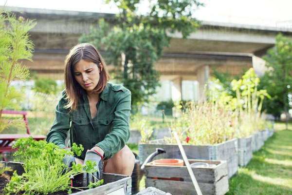 Mid adult woman planting in wooden container at urban garden Royalty-free stock photo