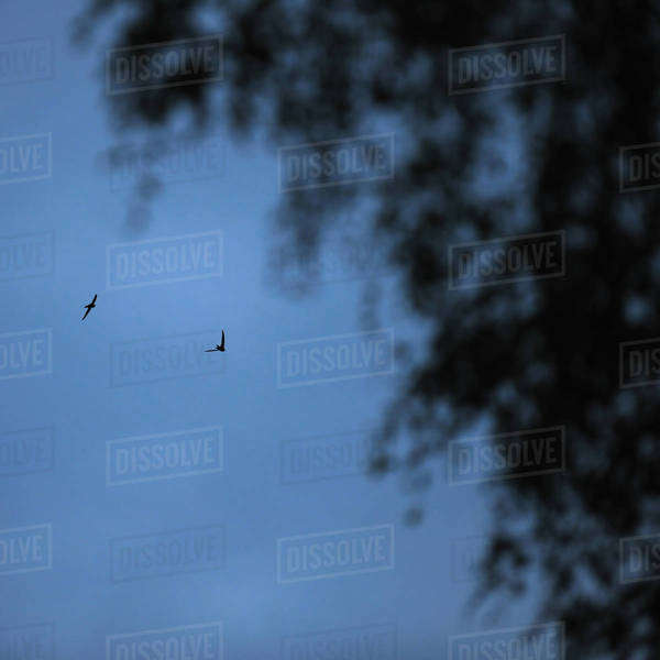 Two flying birds Royalty-free stock photo