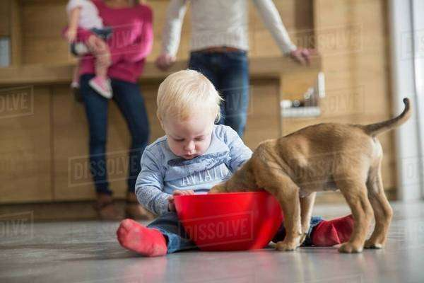 Male toddler watching puppy feeding from bowl in dining room Royalty-free stock photo