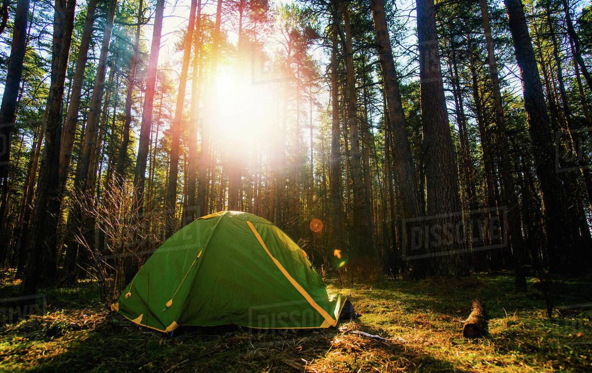 Tent pitched in forest & Tent pitched in forest - Stock Photo - Dissolve