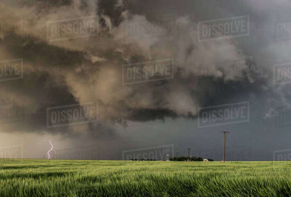 Forking lightning bolt from tornadic storm, turbulent updraft in the foreground over a green field of wheat Royalty-free stock photo