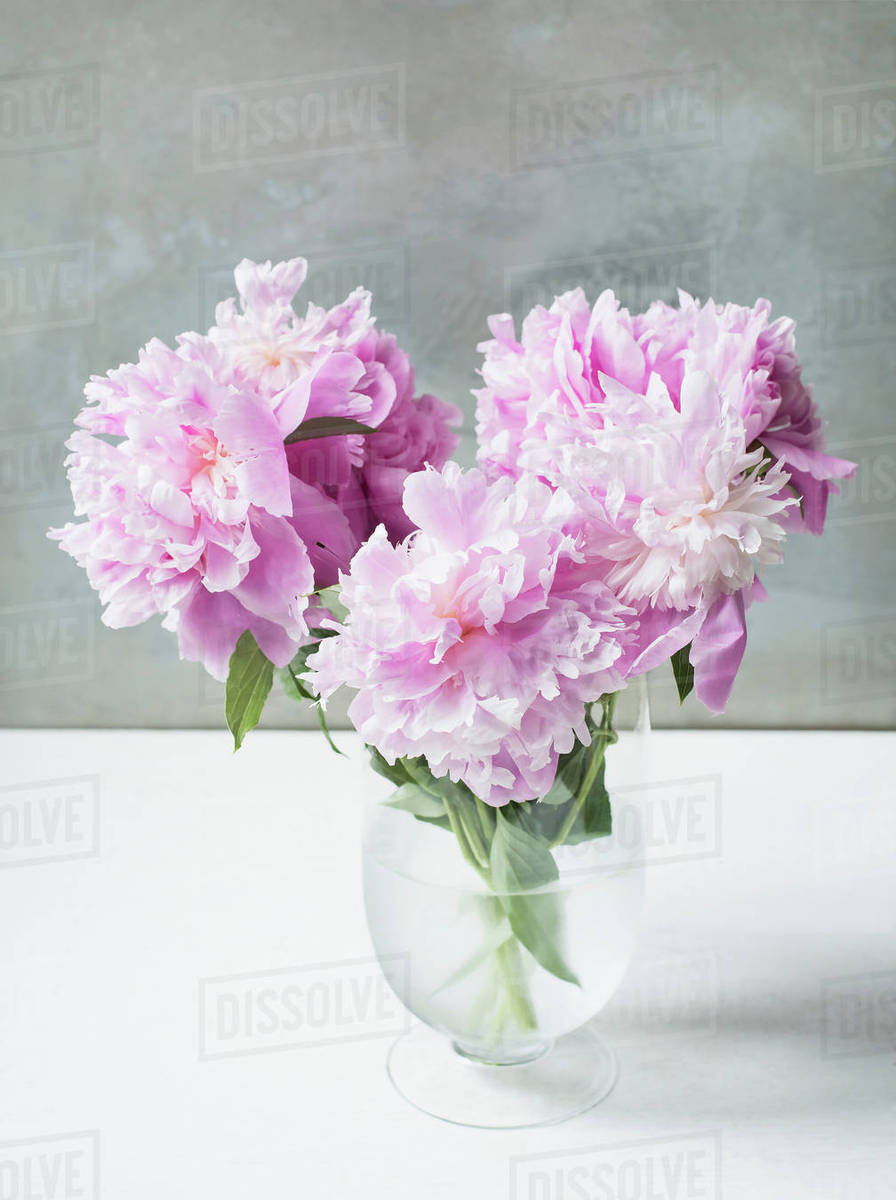 Vase Of Pink Peonies On Table