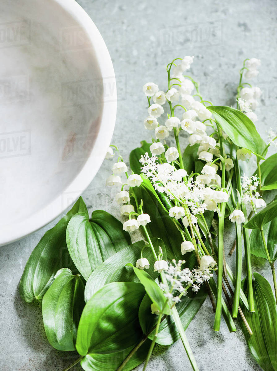 Lily Of The Valley Cut Flowers And Leaves Overhead View Stock