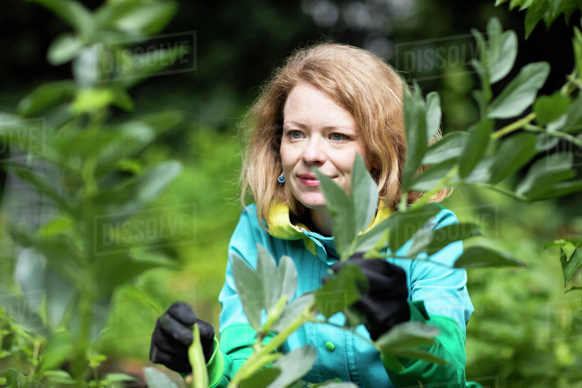 Mid adult woman tending plant in her garden Royalty-free stock photo