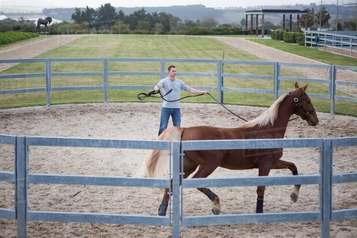 Stablehand Exercising Palomino Horse Around Paddock Ring Stock Photo Dissolve