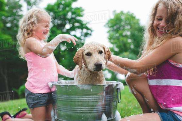 Labrador Retriever puppy in bucket shaking bath water at sisters Royalty-free stock photo