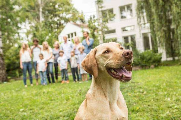 Dog with family in background Royalty-free stock photo